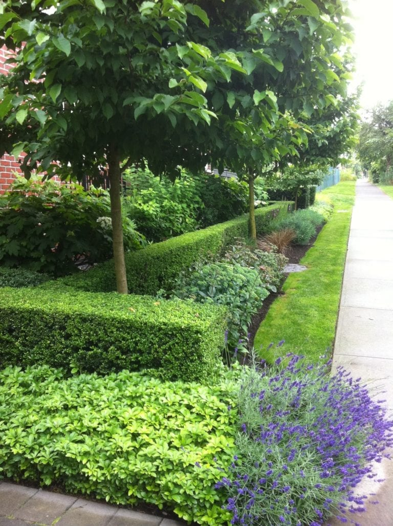 great-canadian-hedge
